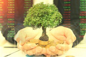 Fiere Investimentos